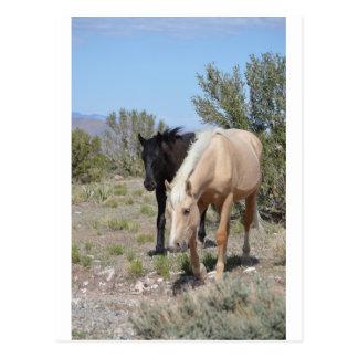 Palomino Mustang Postcard