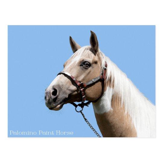 Palomino Paint Horse Portrait Postcard