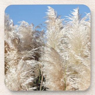 Pampas Grass with a Sunny Blue Sky Coaster