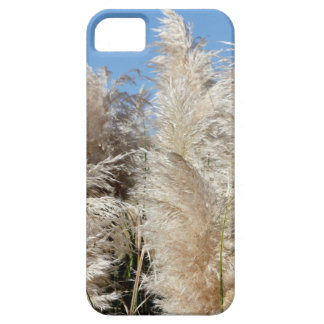 Pampas Grass with a Sunny Blue Sky iPhone 5 Cover
