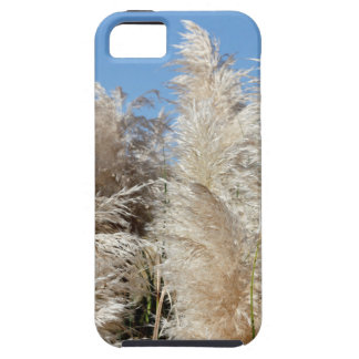 Pampas Grass with a Sunny Blue Sky iPhone 5 Covers