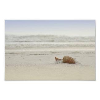 Panama City Shell Photo Print