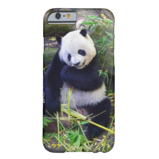 Panda at the San Diego Zoo Barely There iPhone 6 Case