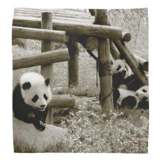 Panda. Baby. Young. Sepia Photogray Bandana