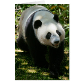 Panda Bear Card