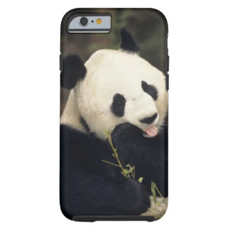 Panda bear, (Close-up) Tough iPhone 6 Case