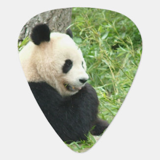 Panda Bear Guitar Pick