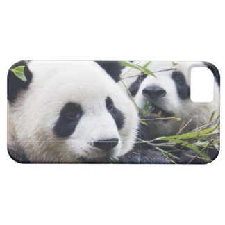 Panda Bear Hugs iPhone 5 Covers