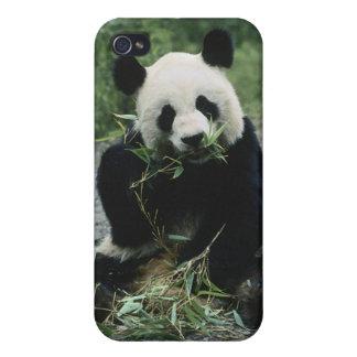 Panda Bear iPhone 4 Covers