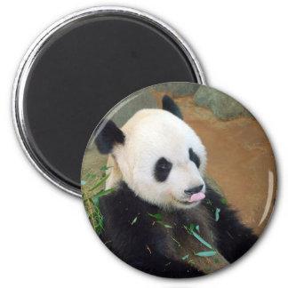 Panda Bear Magnet