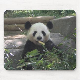 Panda Bear Mousepad