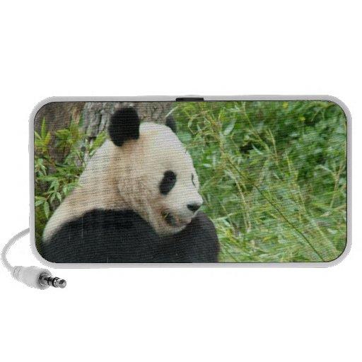 Panda Bear Speakers