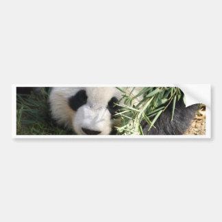 Panda Bear @ Zoo Atlanta Bumper Sticker