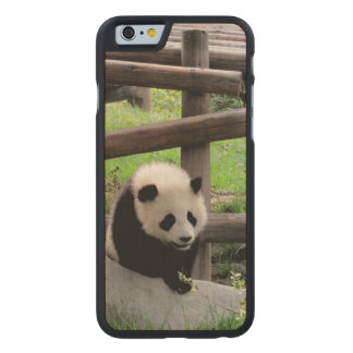 Panda Carved Maple iPhone 6 Case
