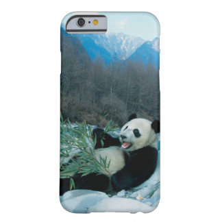 Panda eating bamboo by river bank, Wolong, 2 Barely There iPhone 6 Case
