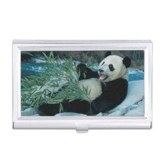 Panda eating bamboo by river bank, Wolong, 2 Business Card Holder