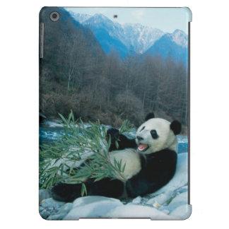 Panda eating bamboo by river bank, Wolong, 2 Case For iPad Air