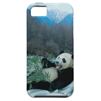 Panda eating bamboo by river bank, Wolong, 2 iPhone 5 Case