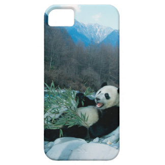 Panda eating bamboo by river bank, Wolong, 2 iPhone 5 Cases