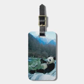 Panda eating bamboo by river bank, Wolong, 2 Luggage Tag
