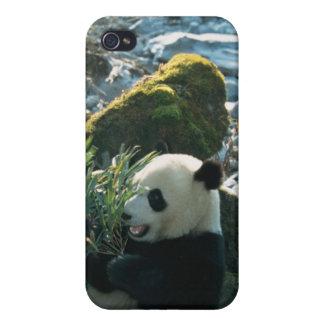 Panda eating bamboo by river bank, Wolong, 3 iPhone 4 Case