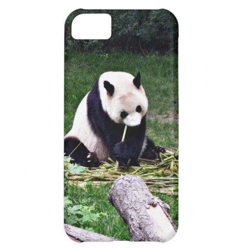 Panda eating Bamboo Case For iPhone 5C