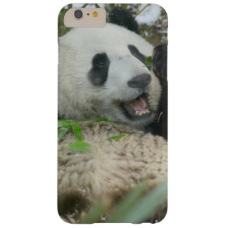 Panda eating bamboo on snow, Wolong, Sichuan, Barely There iPhone 6 Plus Case