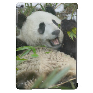 Panda eating bamboo on snow, Wolong, Sichuan, Cover For iPad Air