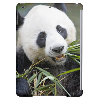 Panda eating bamboo shoots Alluropoda 2 iPad Air Covers