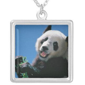 Panda eating bamboo, Wolong, Sichuan, China Silver Plated Necklace