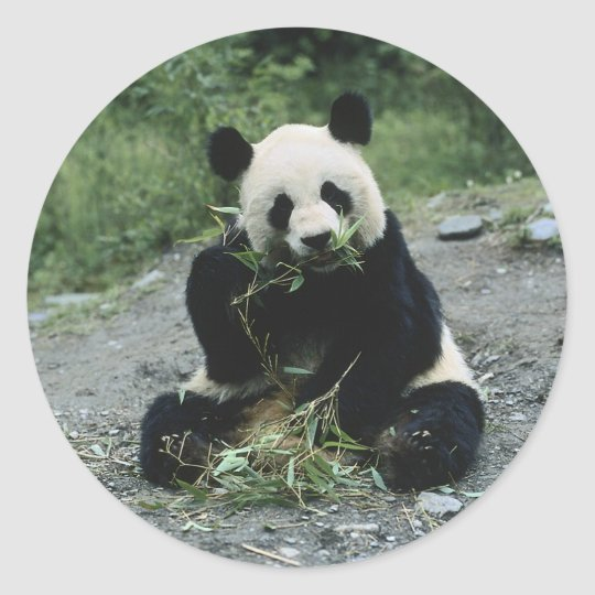 Panda Eating Classic Round Sticker