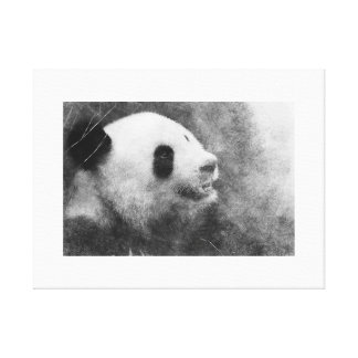 Panda Gazing To The Sky Canvas Print