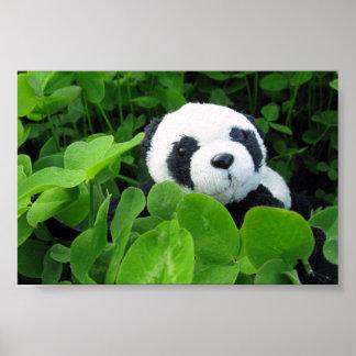 Panda in the Shamrock Poster