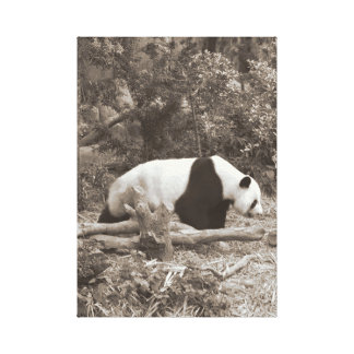 Panda in the wild canvas print