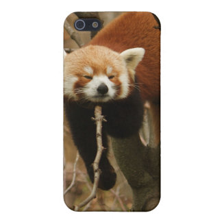 Panda Naptime Cover For iPhone 5/5S