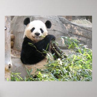 Panda Snack Print