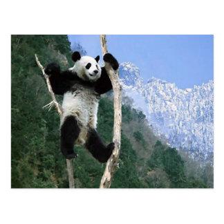 Panda Stuck In Tree Postcard