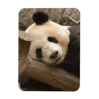 PandaSD010 Rectangular Photo Magnet