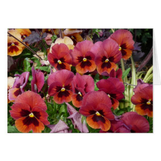 Pansies Card for you!