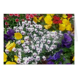 Pansies in the Spring Card