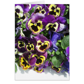 Pansies Multi Color Card