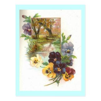 pansies postcard