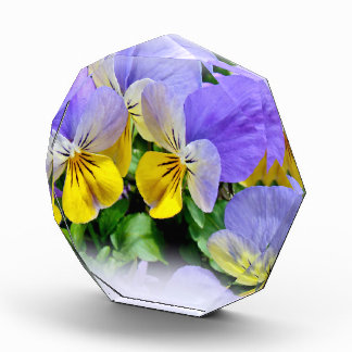 Pansies - Purple and Yellow