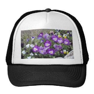 Pansies Trucker Hat