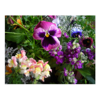 Pansy and Friends postcard