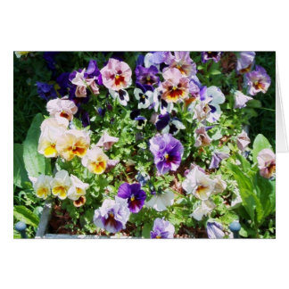 pansy bed card
