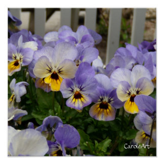 """""""Pansy Blues Fence"""" Art Poster"""