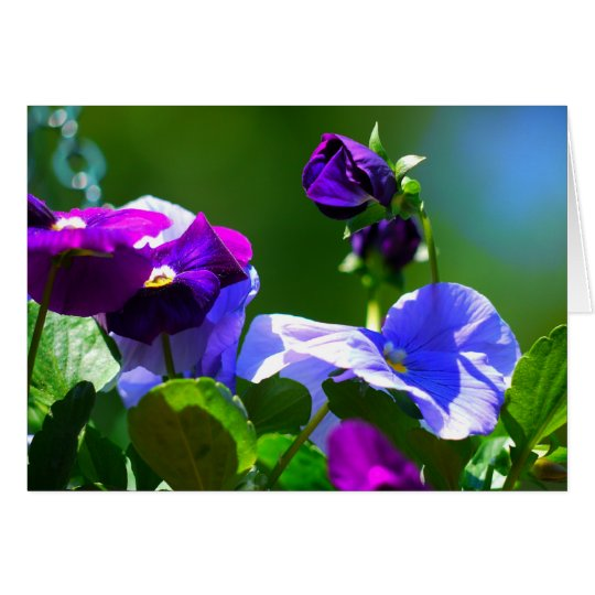 PANSY CARD-ANY OCCASION CARD