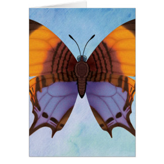 Pansy Daggerwing Butterfly Card