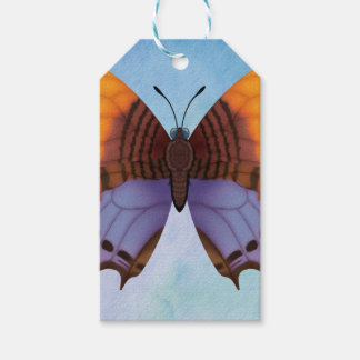 Pansy Daggerwing Butterfly Gift Tags